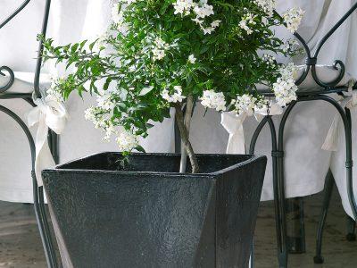 8 vs 4_garden pot