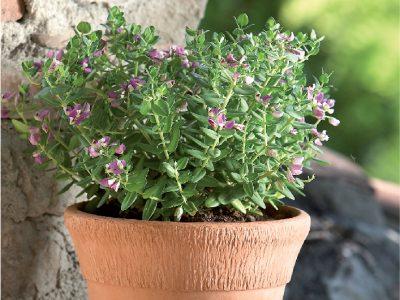 terracotta_garden_bell_pot